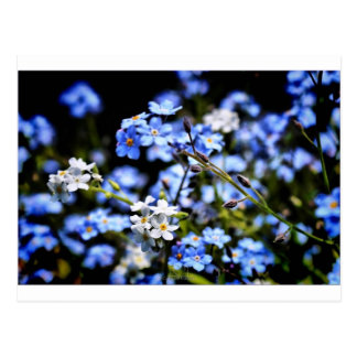 Blue Spring Postcard