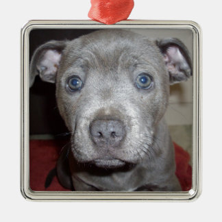 Blue_Staffordshire_Bull_Terrier,_Puppy, Silver-Colored Square Decoration