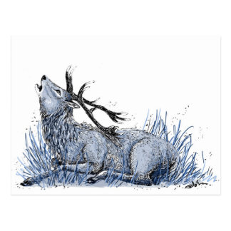 Blue Stag Postcard