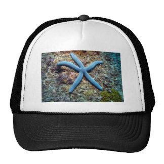 Blue starfish tropical ocean Raja Ampat Islands Hats