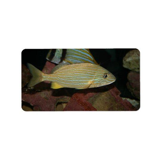blue striped yellow fish saltwater animal label