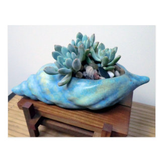 Blue Succulent in Seashell by Succulent Designs Postcard