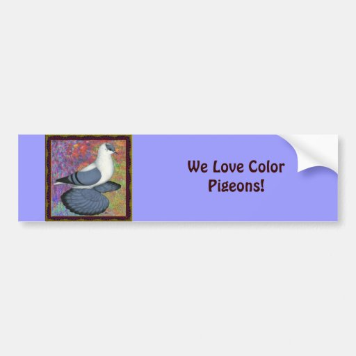 Blue Swallow Pigeon Framed Bumper Stickers