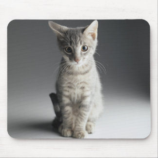 Blue Tabby Kitten Mouse Mat
