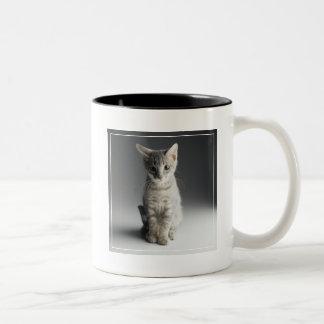 Blue Tabby Kitten Two-Tone Coffee Mug