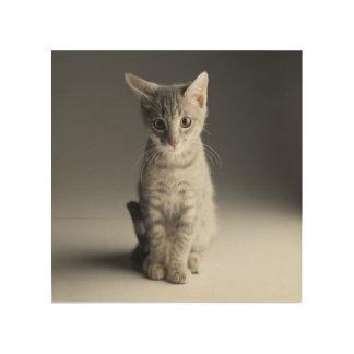 Blue Tabby Kitten Wood Canvas
