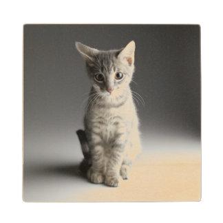 Blue Tabby Kitten Wood Coaster