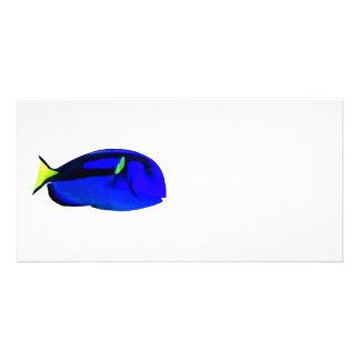 Blue Tang Photo Greeting Card