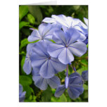 Blue Thinking of You Greeting Card