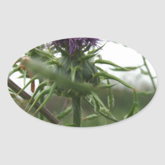 Blue Thistle Oval Stickers