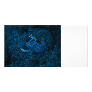 Blue tinted tree frog moss amphibian animal picture card