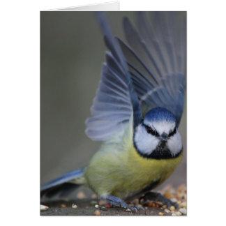 Blue tit bird beautiful wings card