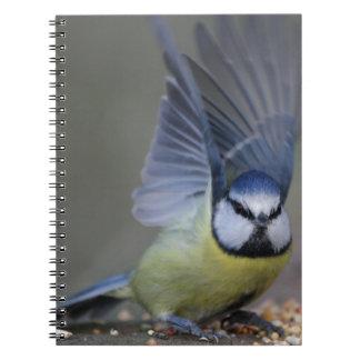 Blue tit bird beautiful wings notebook