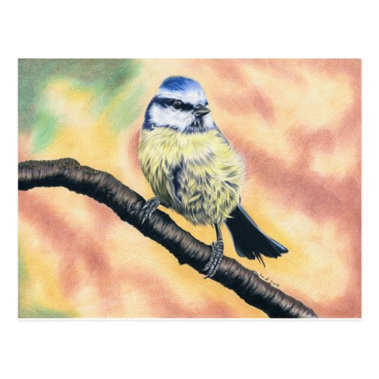 Blue tit - coloured pencil design postcard