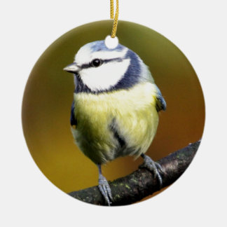 Blue tit sitting on a branch christmas ornament