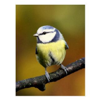 Blue tit sitting on a branch postcard