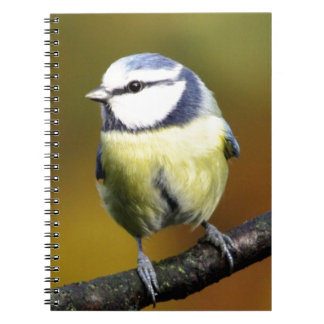 Blue tit sitting on a branch spiral notebook