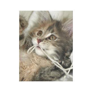 Blue Tortie Kitten Canvas