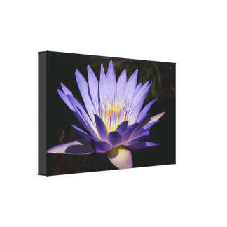 Blue Tropical water lily canvas #4 2017