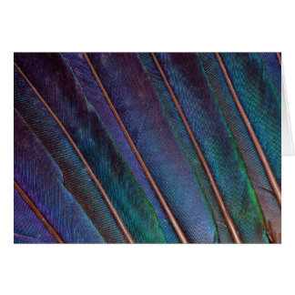 Blue Turaco Feathers Card