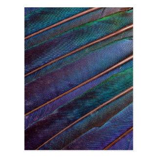 Blue Turaco Feathers Postcard