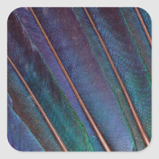 Blue Turaco Feathers Square Sticker