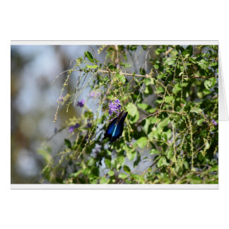 BLUE ULYSSES BUTTERFLY RURAL QUEENSLAND AUSTRALIA GREETING CARD