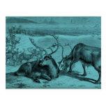 Blue Vintage Reindeer Illustration Postcards