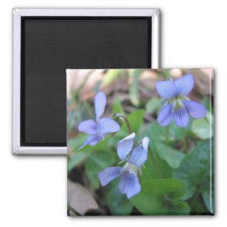 Blue Violets Magnet