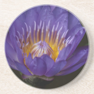 Blue water lily coaster