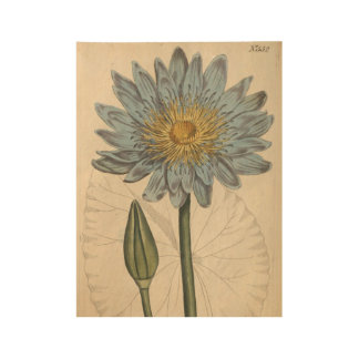 Blue Water Lily Wood Poster