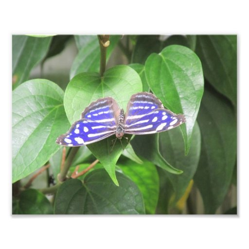 Blue Wave Butterfly Photo Print