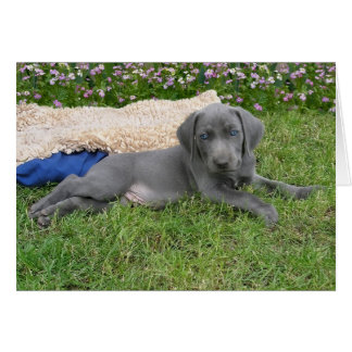 Blue Weimaraner Puppy Card