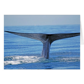Blue Whale Fluke Card