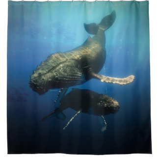 Blue Whales Shower Curtain