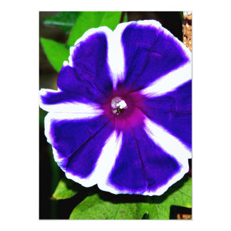 Blue, White and Purple Morning Glory Custom Announcements