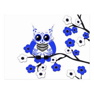 Blue White Cherry Blossoms Owl Postcard