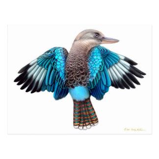 Blue Winged Kookaburra Postcard