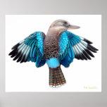 Blue Winged Kookaburra Print