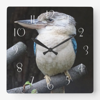 Blue-winged kookaburra square wall clock