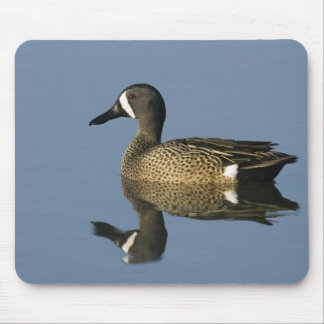 Blue-winged Teal, Anas discors,male, Port Mouse Pad