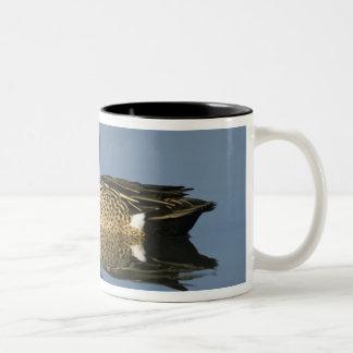 Blue-winged Teal, Anas discors,male, Port Two-Tone Coffee Mug