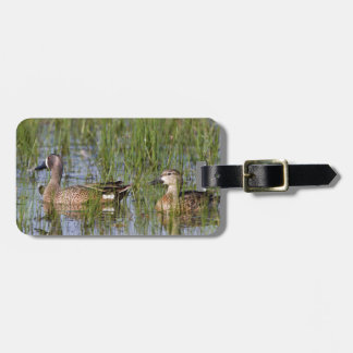 Blue-winged Teal male and female in wetland Bag Tag