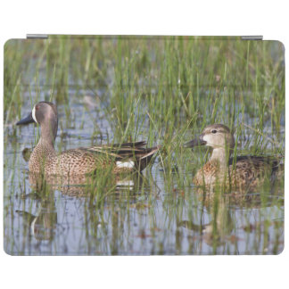 Blue-winged Teal male and female in wetland iPad Cover