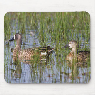Blue-winged Teal male and female in wetland Mouse Pad
