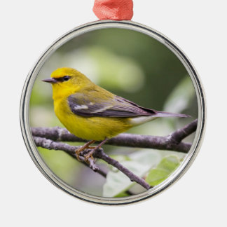 Blue-winged Warbler Christmas Ornament