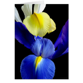 Blue Yellow Iris Flowers 4b Greeting Card