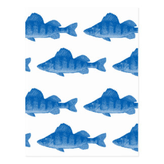 Blue Yellow Perch Fish Postcard