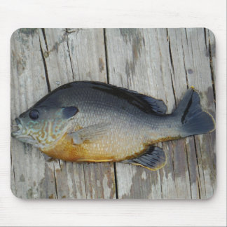 blue yellow purple teal Bluegill fish on dock Mousepad
