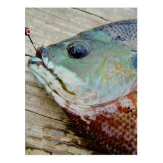 blue yellow purple teal, Bluegill fish on dock Postcard